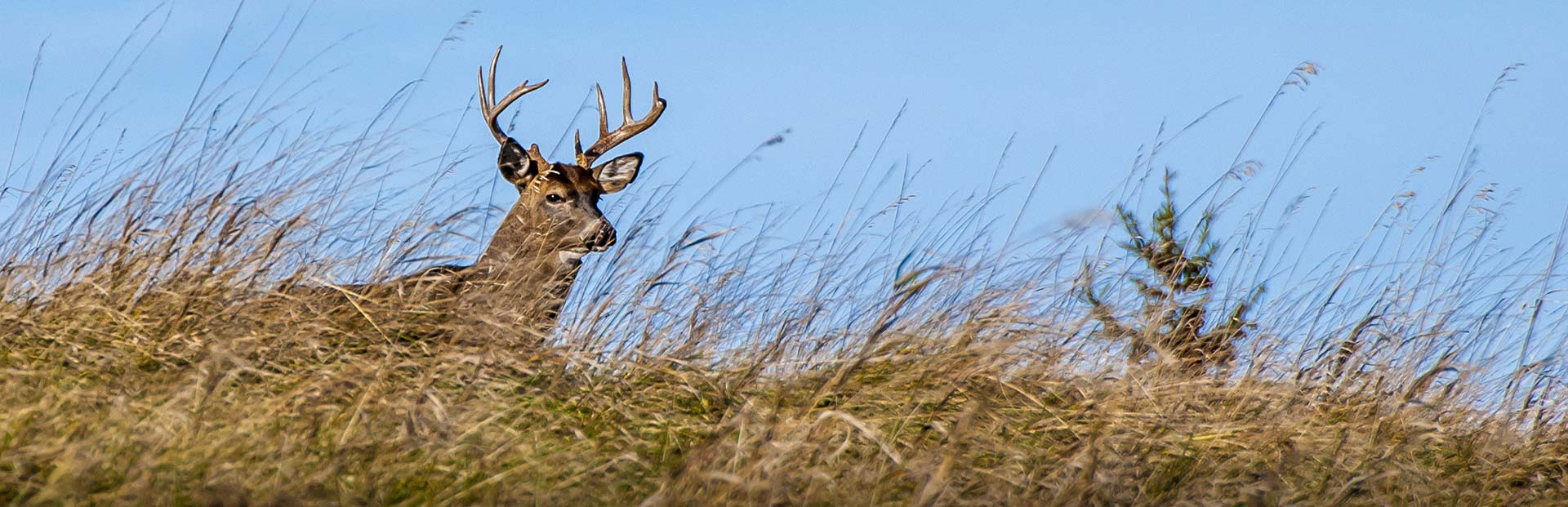 Maine Whitetail Hunts - Spaulding Lake Outfitters