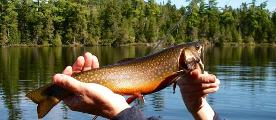 Northern maine fishing trips spaulding lake outfitters for Fishing tours near me